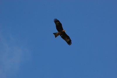 358 - Eagle