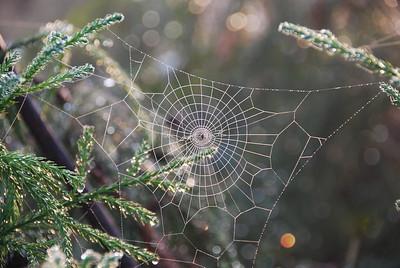 353 - Spider web