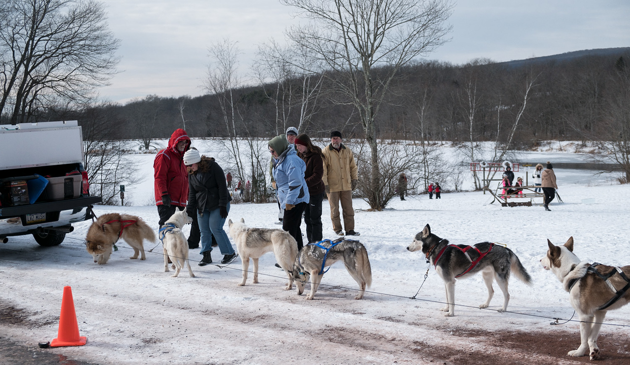 Sleddogs and People II