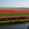 Tulip fields near Keukenhof Gardens, Amsterdam