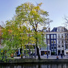Tree by a canal in Amsterdam.