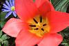 Tulip06_0022