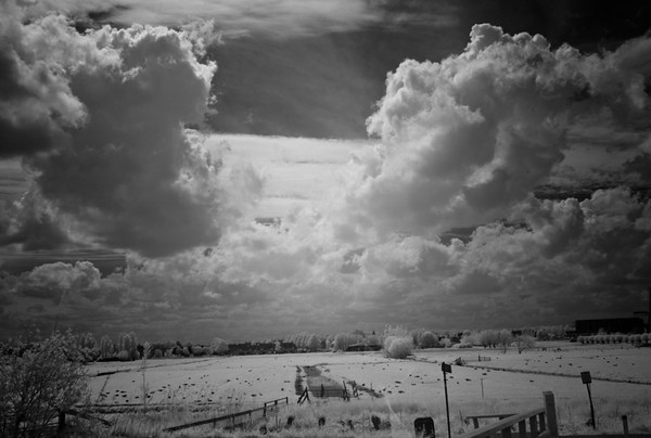 Kinderdijk Infrared 2014