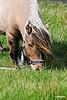Horse_Terschelling_07_0514