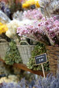 Bloemenmarkt, Flower Market Amsterdam, Netherlands