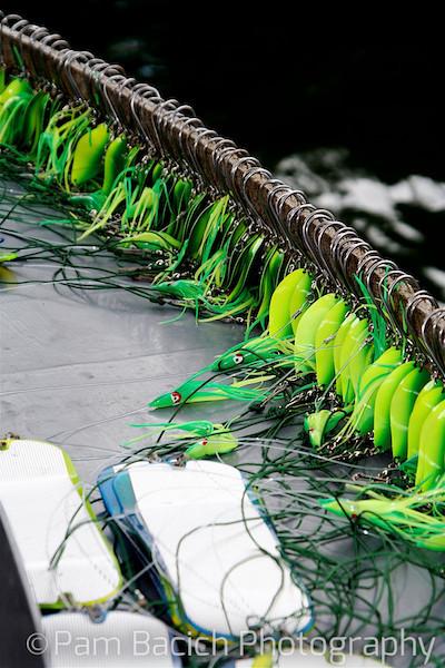 Ready, Set, Go Fish