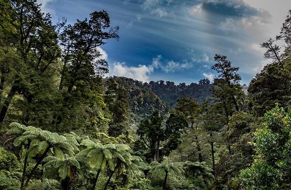 Auf dem «Orongorongo Track» im «Rimutaka Forest Park»