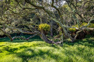 An der «Waikahoa Bay»