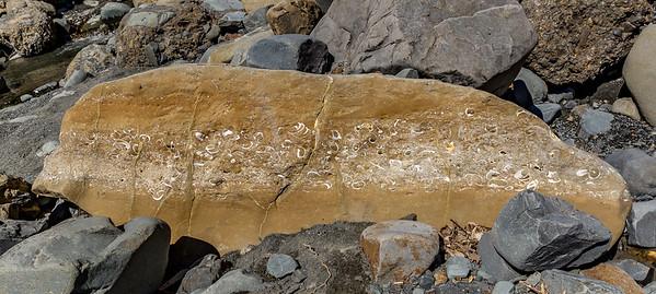 Putangirua Scenic Reserve - Versteinerte Vergangenheit
