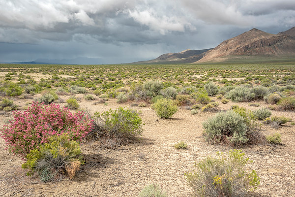 Spring Rain over the Black Rock and Calicos, Black Rock Desert, NV