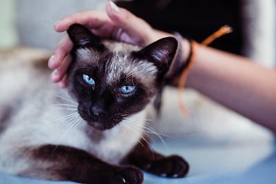 Animal Save | Cats | Lenkaland Photography