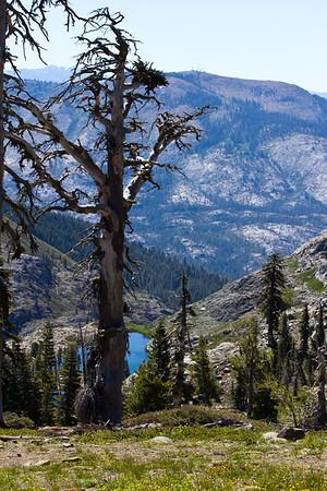 Grouse Ridge Ca 051