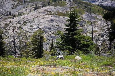 Grouse Ridge Ca 129