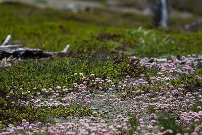 Grouse Ridge Ca 084