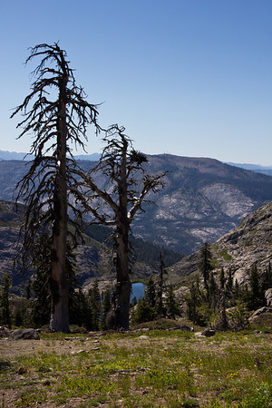 Grouse Ridge Ca 043