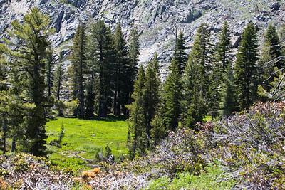 Grouse Ridge Ca 100