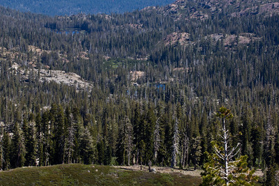 Grouse Ridge Ca 065