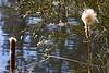 Marsh Pond 045
