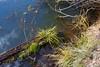 Marsh Pond 037
