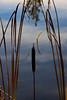 Marsh Pond 030