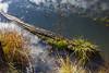 Marsh Pond 041
