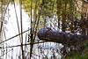 Marsh Pond 061