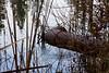 Marsh Pond 028