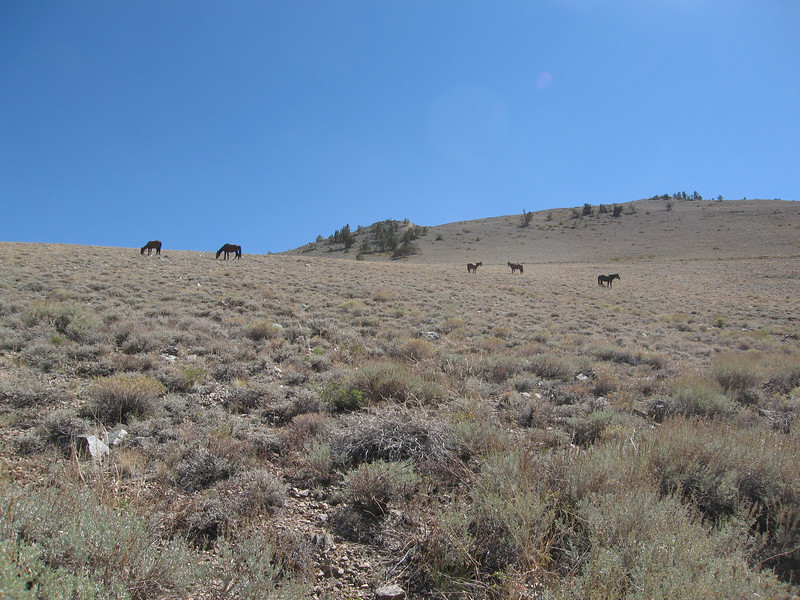I went to the trailhead the day before the hike to camp and was delighted to see the wild horses near the Queen Mine.