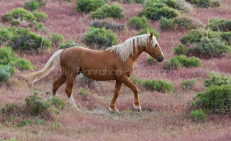 Blonde Stallion #2