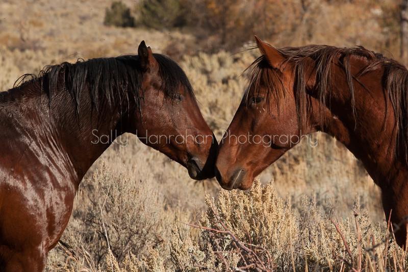 Washoe Valley Wild Ones