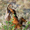 Fighting Mustangs #1