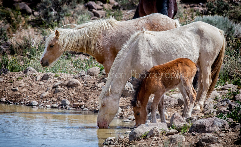 Watering Hole 1