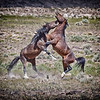 Fighting Mustangs #2