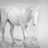 Spirit Horse #2