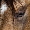 Eye See You #2