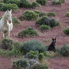 Albino Mare and Foal