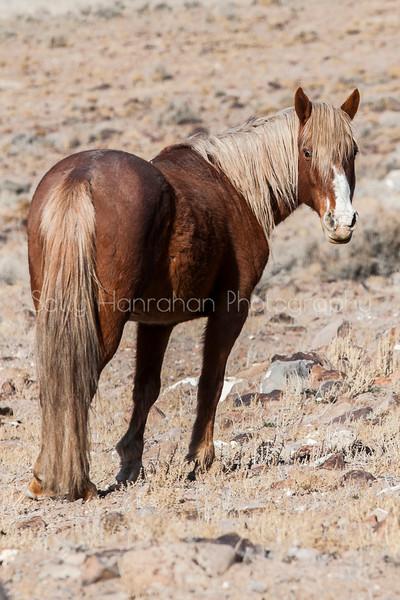 Mustang #0505
