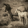 Mare and Foal #2 #6003