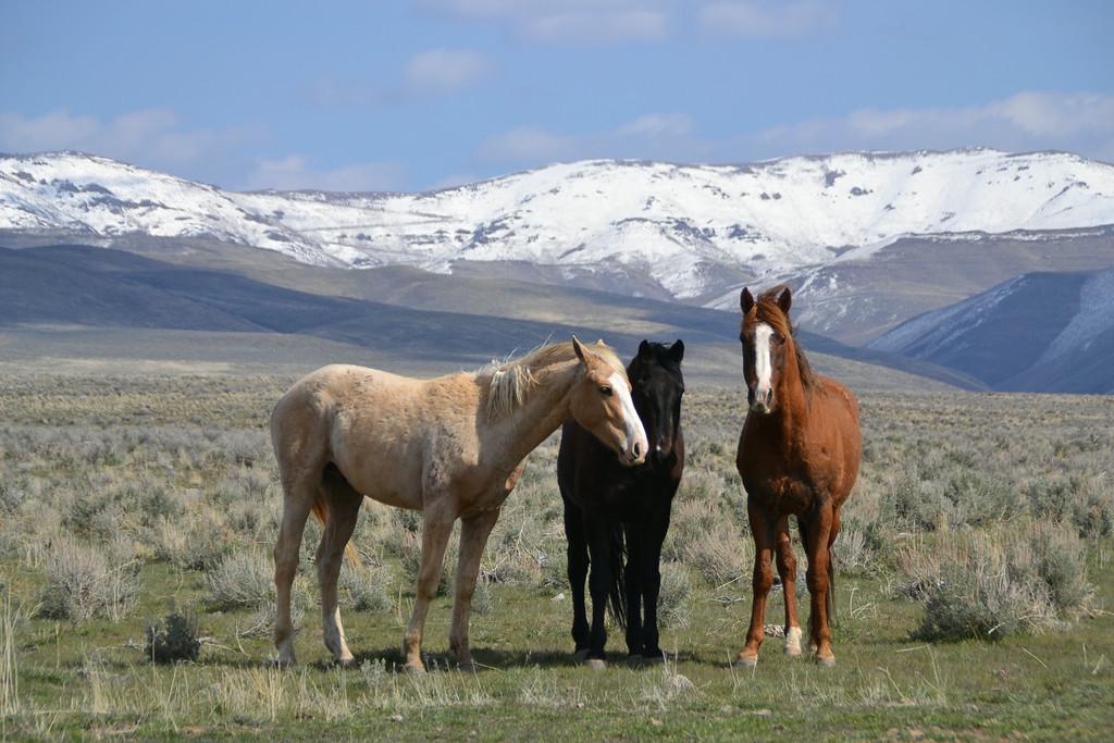 Buckskin Canyon Road Horses