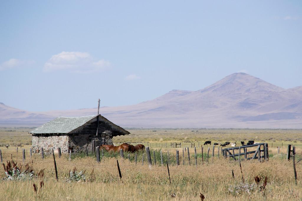 Horses on Vance Ranch, Nevada