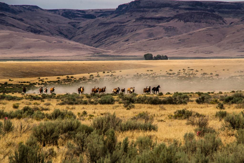 Horses on the High Desert