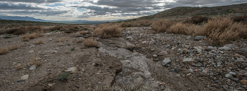Water in the desert ? Only after a storm .
