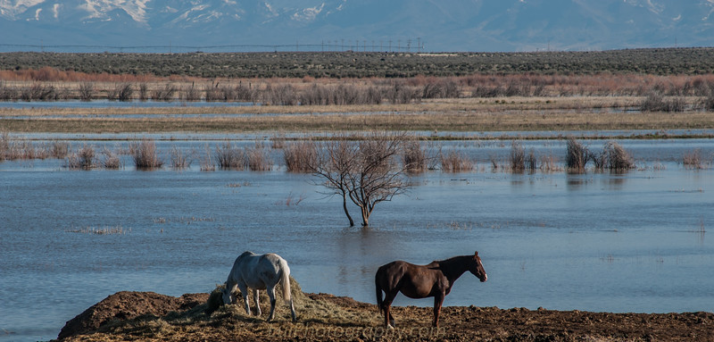Lots of rain , the desert now is transformed in a marsh .