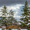Snow Trees2 March1 ©2015MelissaFaithKnight -