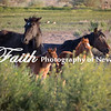 Wild Horses Young Foals Damonte Ranch Reno NV ©2016MelissaFaithKnight&FaithPhotographyNV_0814