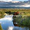 Wild Horse Drinking reflections Portrait Green Landscape  ©2016MelissaFaithKnight&FaithPhotographyNV_1184