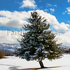 Reno Winter TREE  Feb ©2016MelissaFaithKnight&FaithPhotographyNV_9476