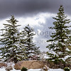 _MG_8897  Snow Trees Dark Cloud ©2016MelissaFaithKnight&FaithPhotographyNV