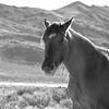 Wild Horse Profile
