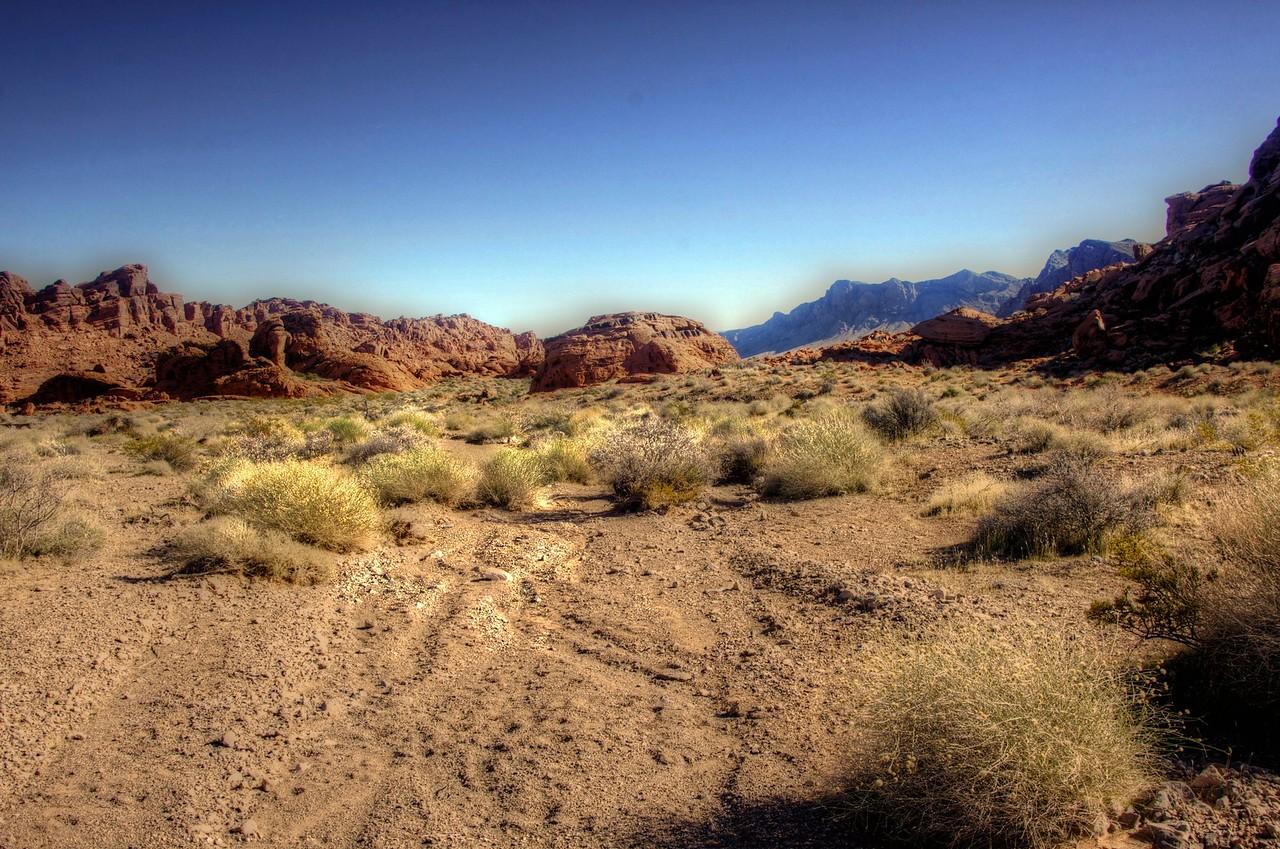 Midday Desert
